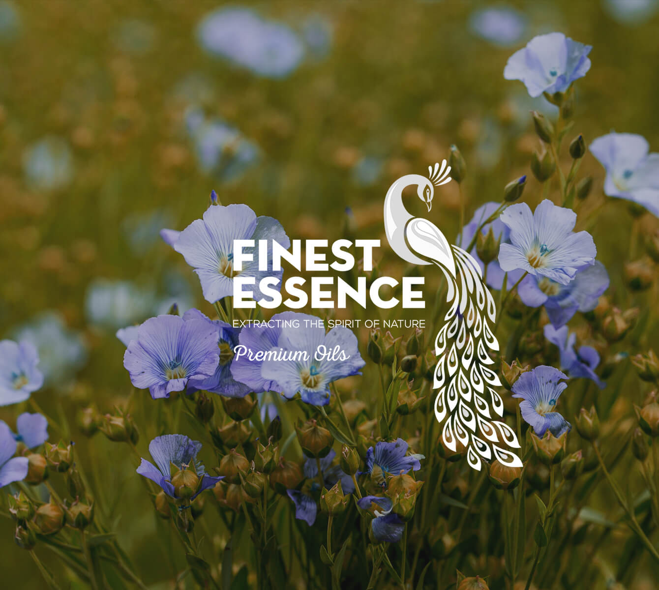 FINNEST ESSENCE – Spark of Life Inside